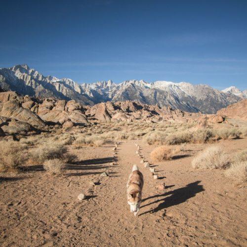 dog walking on trail near Crowley Lake